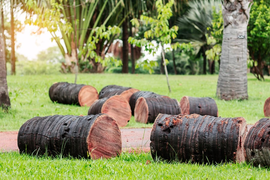 reliable stump removal and stump grinding