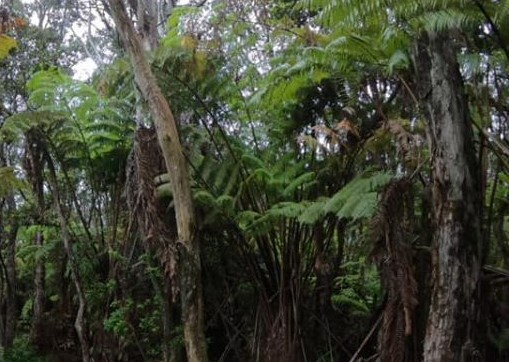 Big Island Tree Service