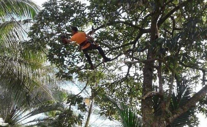 Tree Services Big Island, Hawaii crop