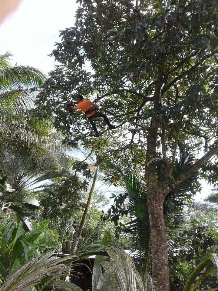 Tree Services Big Island, Hawaii