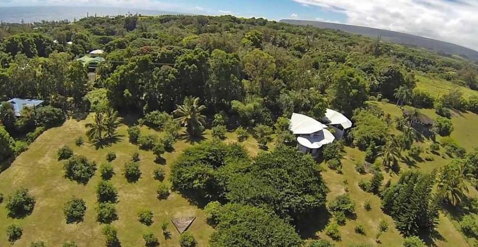 Tree Service Big Island Hawaii