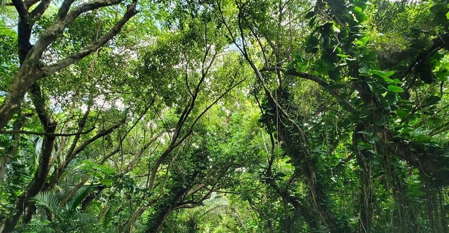Trees Hawaii Island